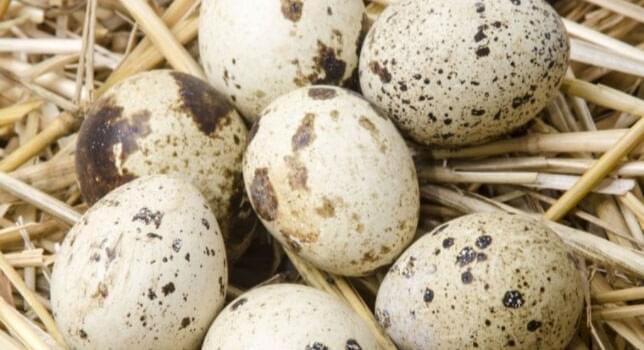 Avian Ecotoxicology Testing
