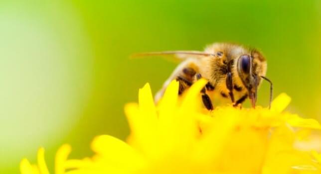 Pollinator Studies