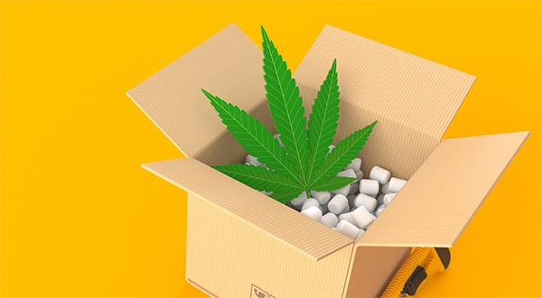 Smithers forecasts the global cannabis packaging market to reach $1.6 billion in 2024