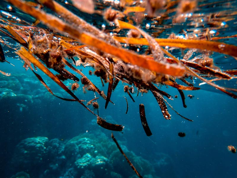 Global market for marine biotechnology has potential to reach $6.4 billion by 2025