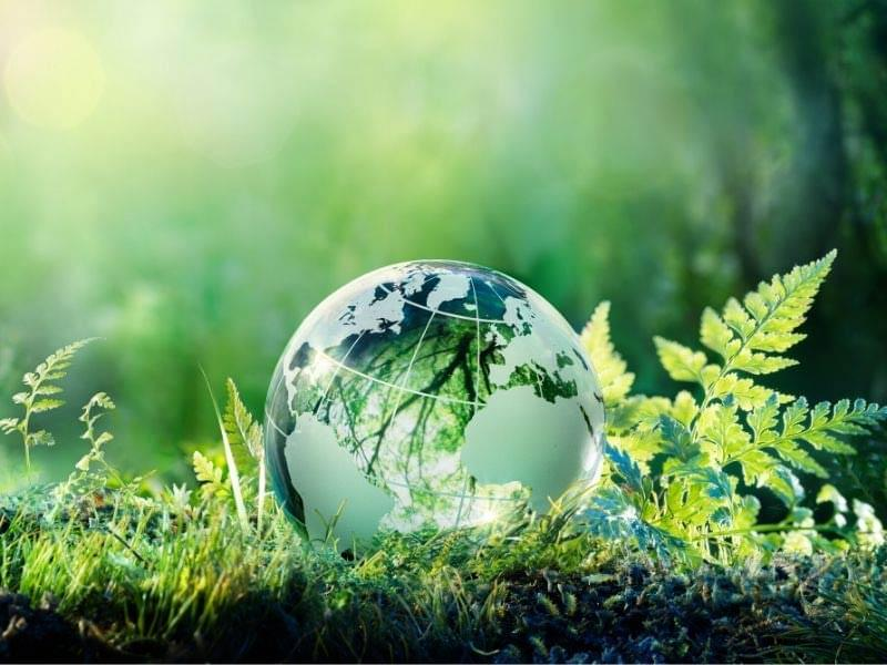 Packaging sustainability trends guide